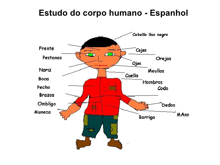 Estudo do corpo humano - Espanhol