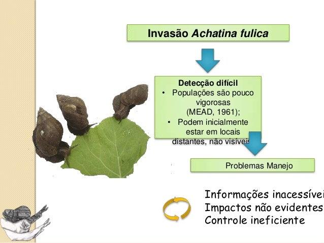 Protocolo para Diagnóstico de Populações Achatina fulica  Slide 3