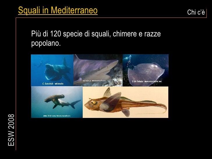 Squali in Mediterraneo Chi c'è ESW 2008 Più di 120 specie di squali, chimere e razze popolano.