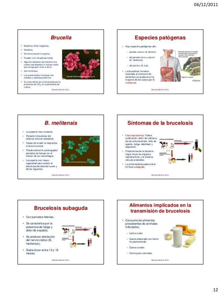 06/12/2011                                Brucella                             Especies patógenas Bacterias Gram negativa...