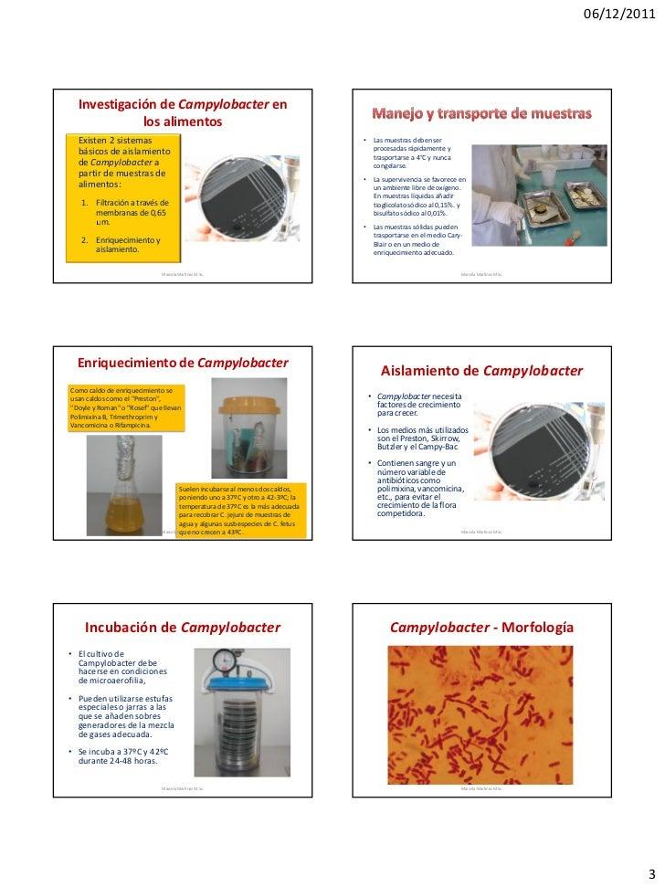 06/12/2011  Investigación de Campylobacter en             los alimentos  Existen 2 sistemas                               ...
