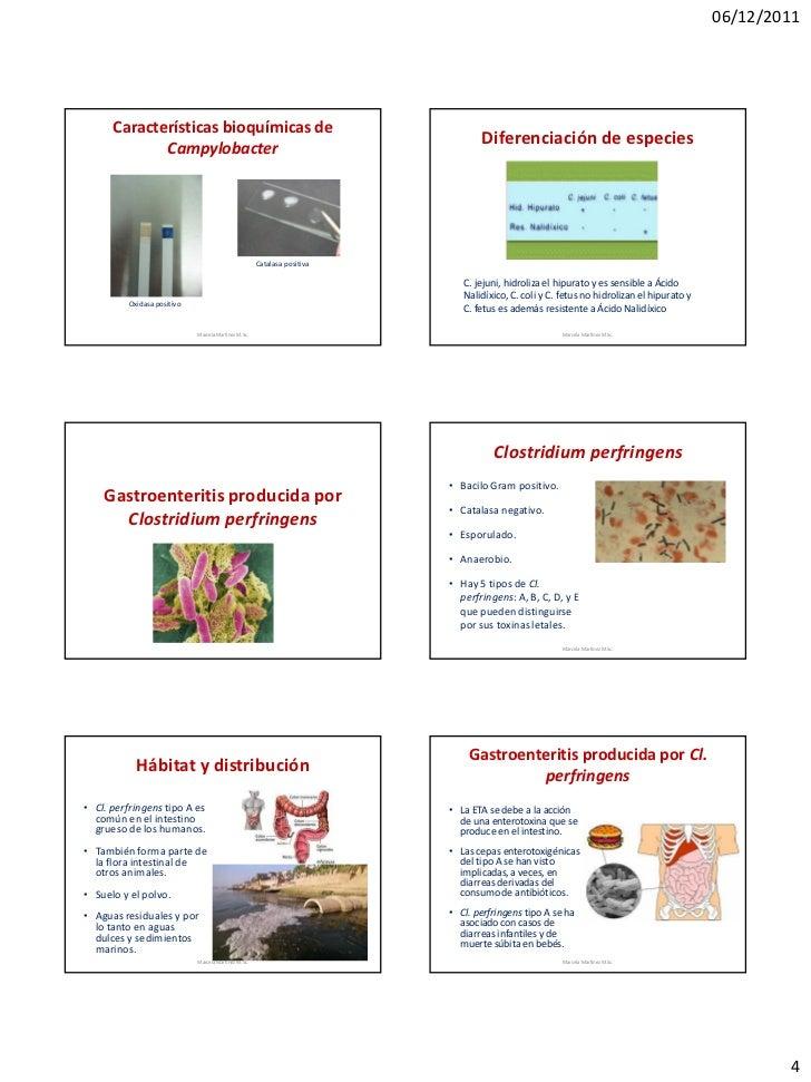 06/12/2011      Características bioquímicas de                                                                            ...