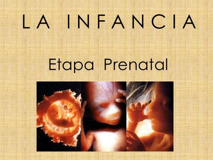 LA INFANCIA Etapa Prenatal