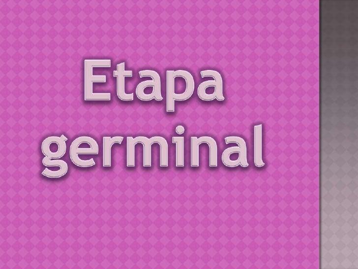 (se da desde la fecundación hasta las dos semanas): El  organismo se divide y se implanta en la pared del útero. El  huevo...