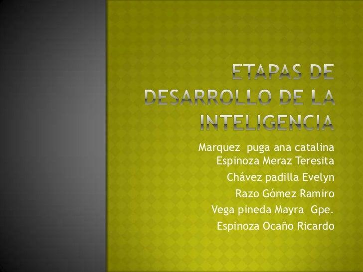 Etapas de desarrollo de la inteligencia<br />Marquez  puga ana catalinaEspinoza Meraz Teresita<br />Chávez padilla Evelyn<...
