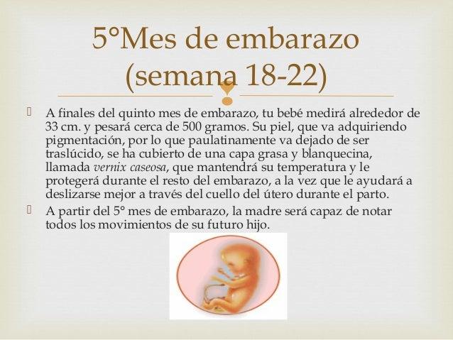 17b392348 ... mes de embarazo(semana 14-17)  6.