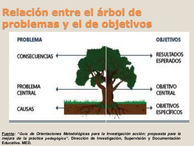 Etapas de la investigacion accion for Investigacion de arboles