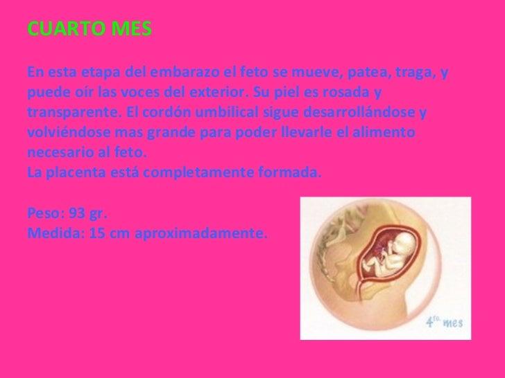 Etapas del embarazo for Cuarto embarazo