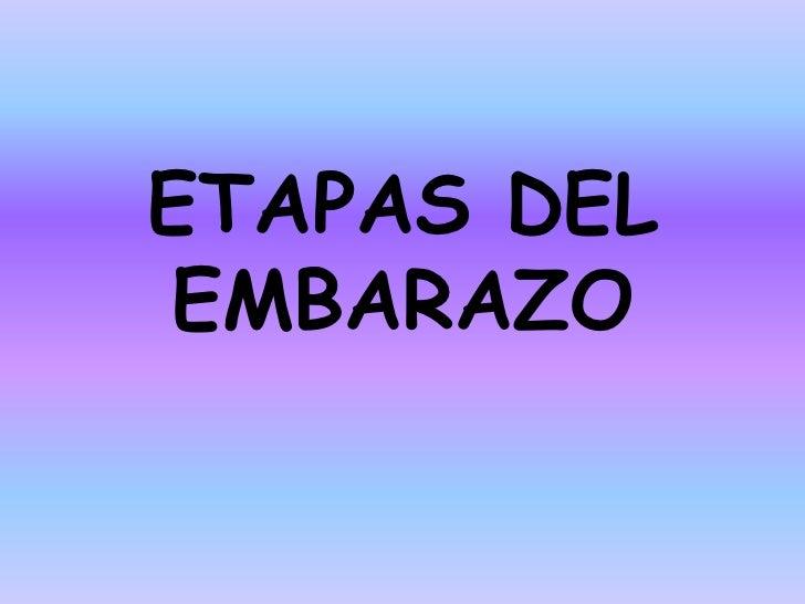 ETAPAS DELEMBARAZO