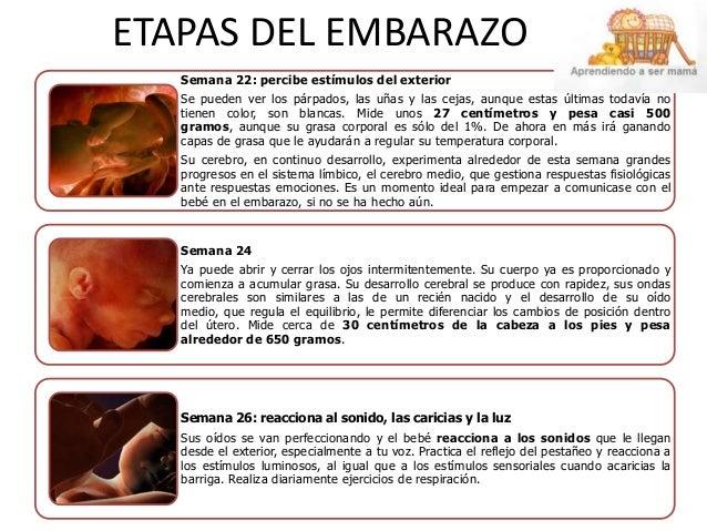 etapas-del-embarazo-4-638.jpg?cb=1396717207
