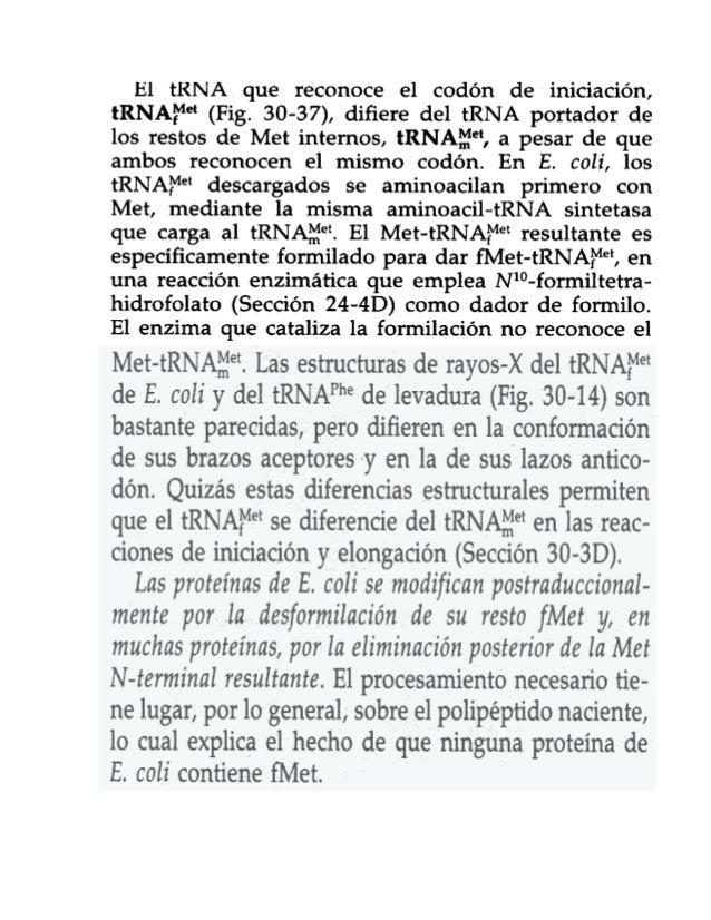 El:  tRNA.  que reconoce el codón de iniciación,  tRNAFM-(Fig.  30-37),  difiere del tRNA portador de los restos de Met in...