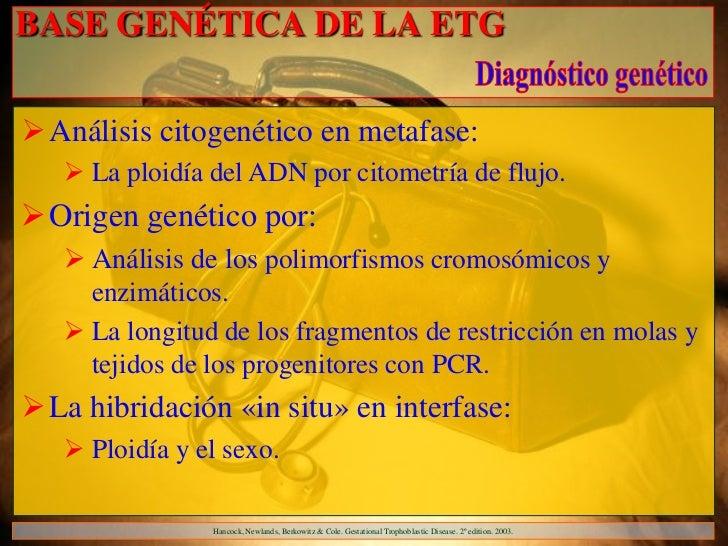 BASE GENÉTICA DE LA ETG Análisis citogenético en metafase:    La ploidía del ADN por citometría de flujo.Origen genétic...