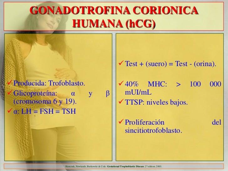 GONADOTROFINA CORIONICA           HUMANA (hCG)                                                                 Test + (su...