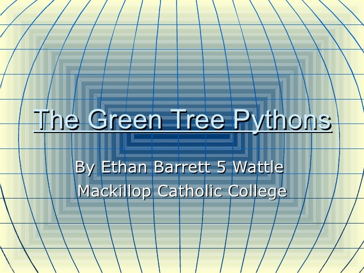 The Green Tree Pythons By Ethan Barrett 5 Wattle  Mackillop Catholic College