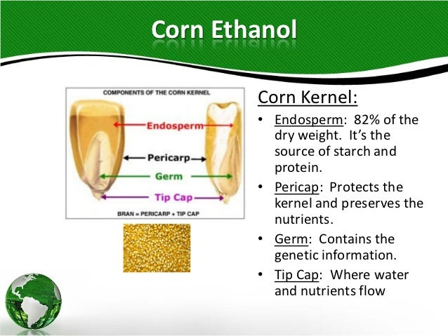 the corn ethanol industry essay According to the renewable fuels association, ethanol production in 2015 led to the addition of nearly 86,000 direct jobs across the country on a life cycle analysis basis, ghg emissions are reduced on average by 40% with corn-based ethanol produced from dry mills.