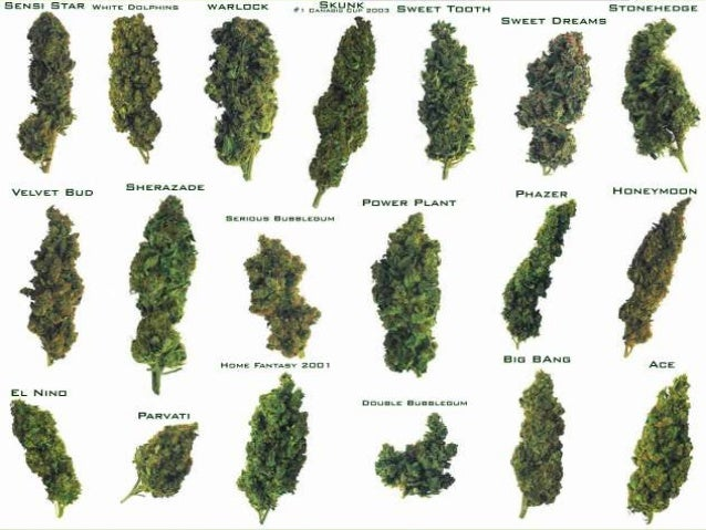 Arguments for and against drug prohibition
