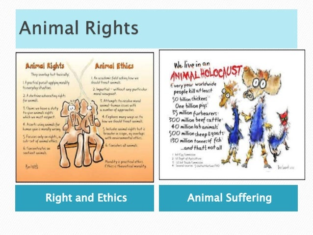 Ethics of Using animals in Research