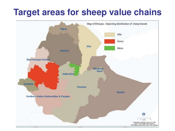 Update on sheep meat value chain development in Ethiopia