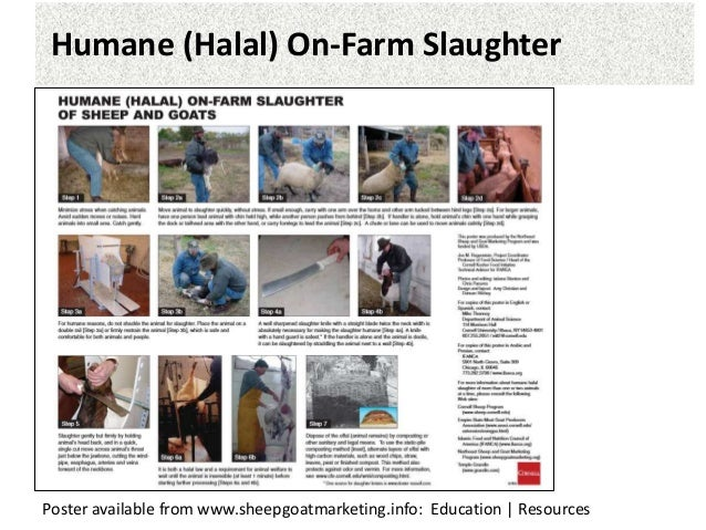 disadvantages of halal slaughter Halal meat market  measuring rib eye area  lamb marketing  there are also several disadvantages price is not known ahead of time and can fluctuate widely.