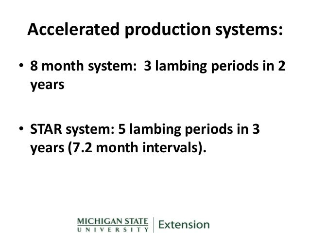 Production plan for ethnic marketing of lamb and mutton