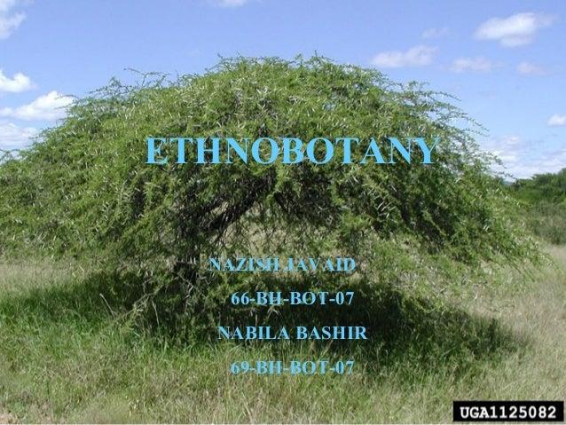 ETHNOBOTANY NAZISH JAVAID 66-BH-BOT-07 NABILA BASHIR 69-BH-BOT-07