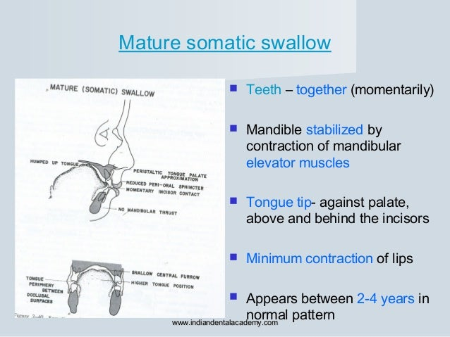 Mature somatic swallow  Teeth – together (momentarily)  Mandible stabilized by contraction of mandibular elevator muscle...