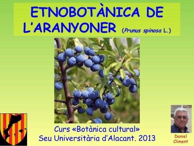 ETNOBOTÀNICA DE L'ARANYONER (Prunus spinosa L.)  Curs «Botànica cultural» Seu Universitària d'Alacant. 2013  Daniel Climen...