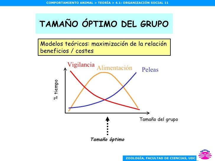 TAMAÑO ÓPTIMO DEL GRUPO Modelos teóricos: maximización de la relación beneficios / costes Peleas Vigilancia Alimentación T...