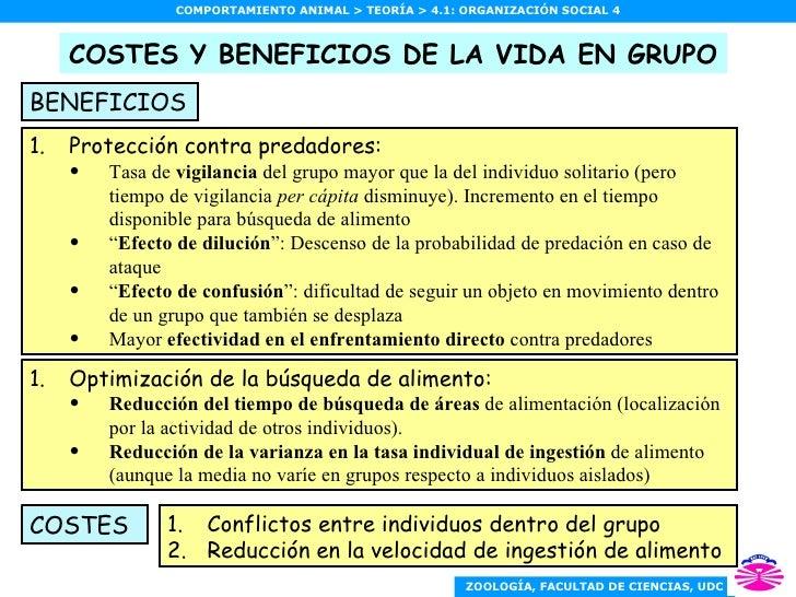 COSTES Y BENEFICIOS DE LA VIDA EN GRUPO <ul><li>Protección contra predadores: </li></ul><ul><ul><li>Tasa de  vigilancia  d...