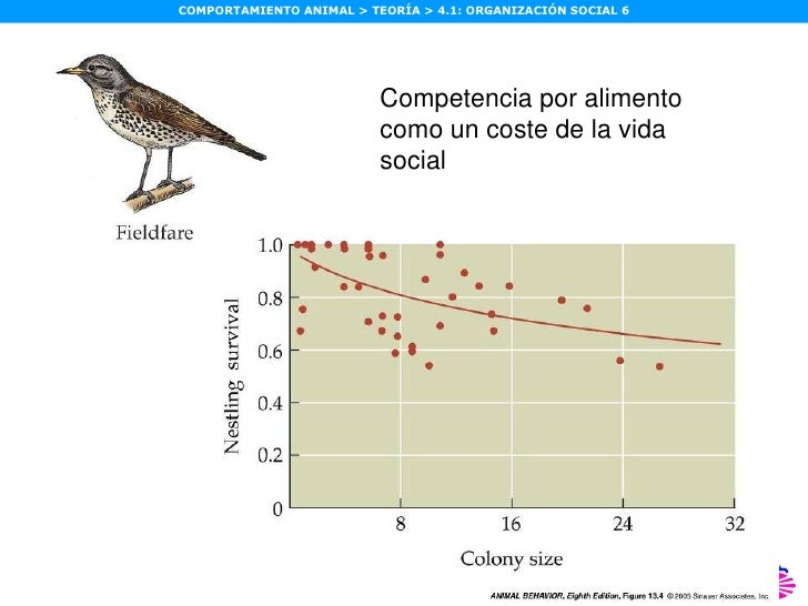 13.4  Competition for food is a cost of sociality in the fieldfare Competencia por alimento como un coste de la vida social