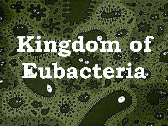 the eubacteria