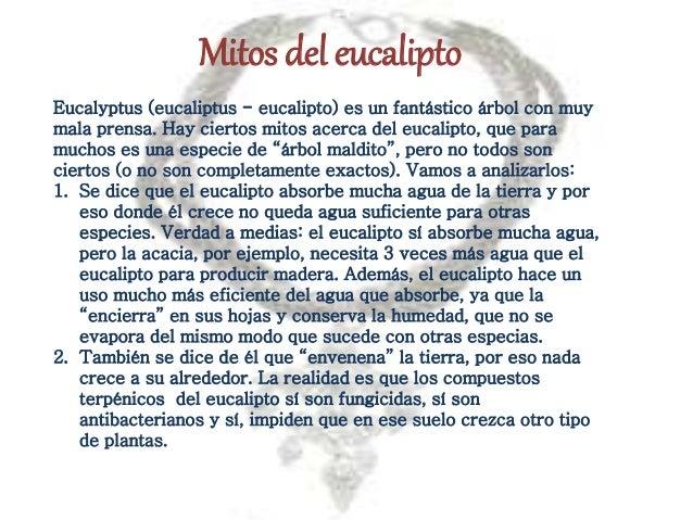 Eucalypto - Informacion sobre el eucalipto ...