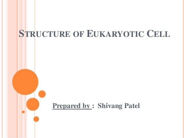 STRUCTURE OF EUKARYOTIC CELL  Prepared by : Shivang Patel