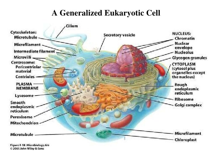 Eukariotic Cell Structure