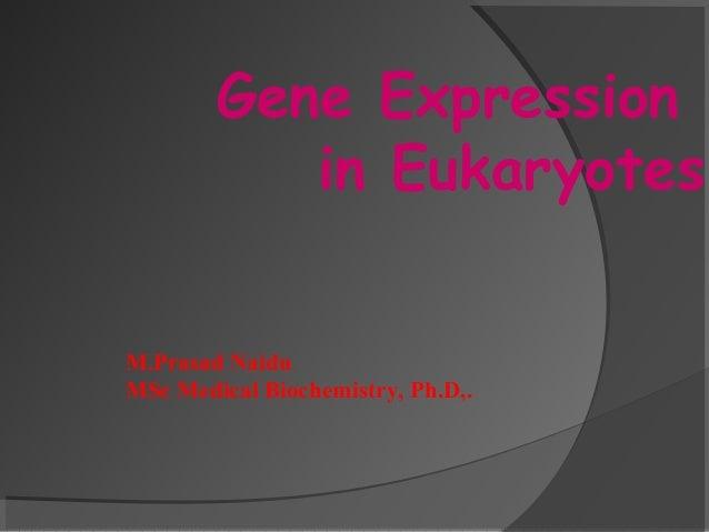 Gene Expression in Eukaryotes M.Prasad Naidu MSc Medical Biochemistry, Ph.D,.