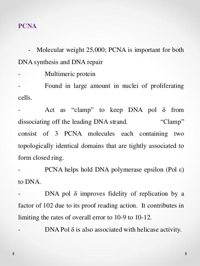 Eukaryotic DNA replication – Dna Replication Activity Worksheet