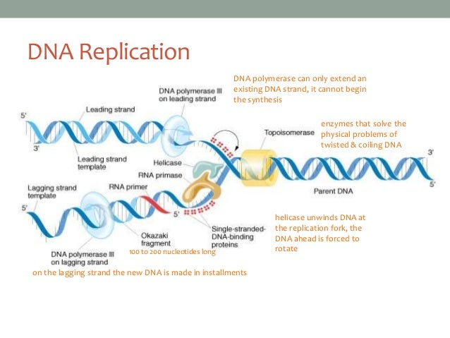 watson and crick dna research paper 1953: dna double helix francis crick and james watson described the double helix structure of dna by the time watson and crick turned their attention to solving the chemical structure of dna, dna was known to have the following attributes.