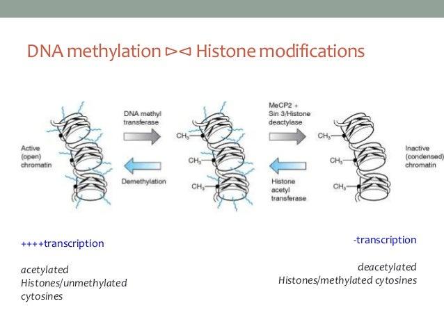 genomic imprinting animation - photo #36