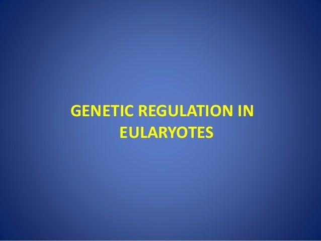 GENETIC REGULATION IN EULARYOTES