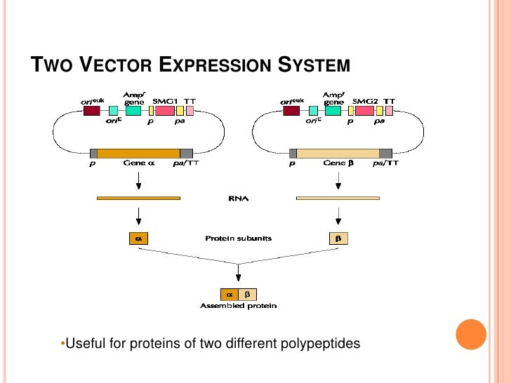yeast expression system essay Taqman® gene expression assay solutions  manufacturing quality system, we  yeast rna to evaluate the sensitivity and dynamic range of taqman.