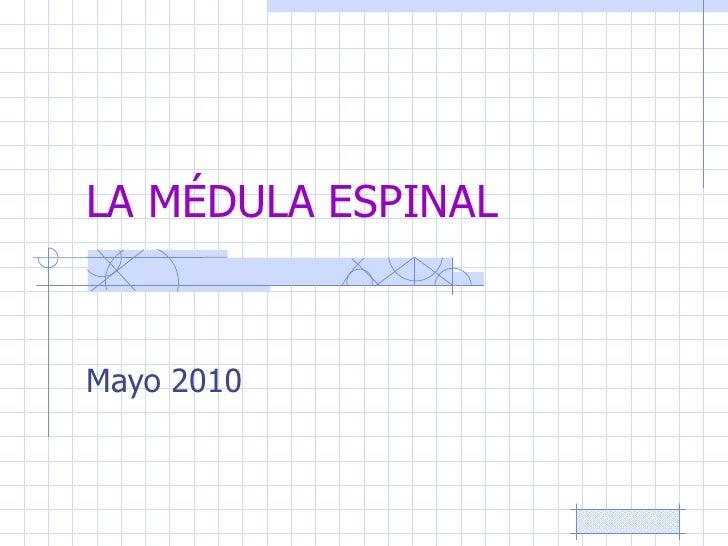 LA MÉDULA ESPINAL Mayo 2010