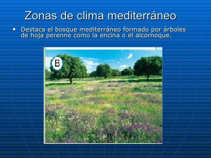 Europa for Arboles de hoja perenne para clima continental