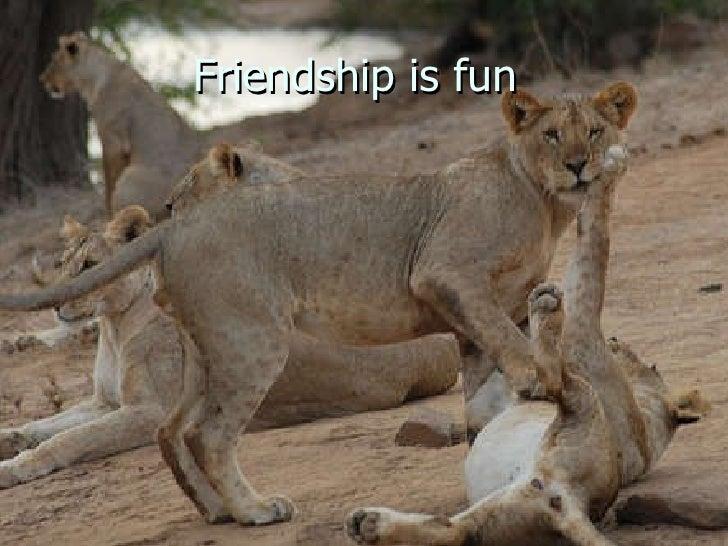 Friendship is fun