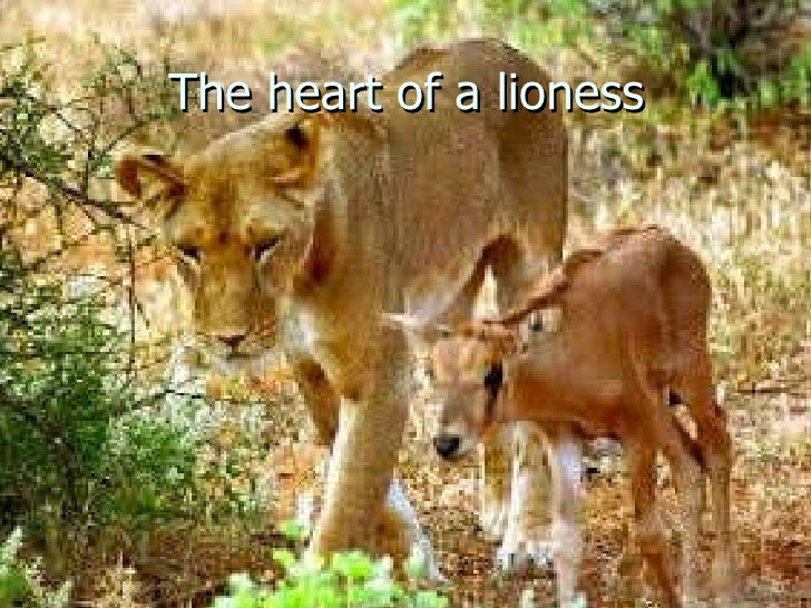 The heart of a lioness