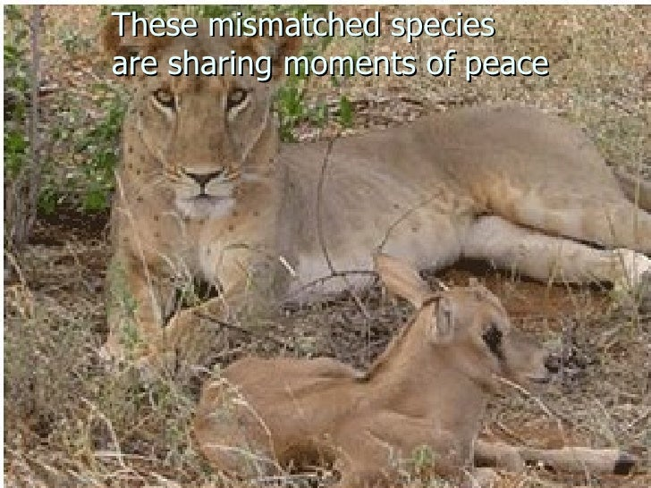 These mismatched species  are sharing moments of peace