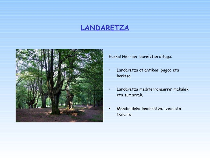 LANDARETZA <ul><li>Euskal Herrian  bereizten ditugu: </li></ul><ul><li>Landaretza atlantikoa: pagoa eta haritza. </li></ul...