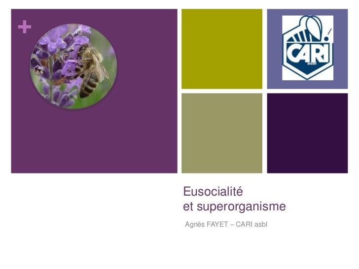 +    Eusocialité    et superorganisme    Agnès FAYET – CARI asbl