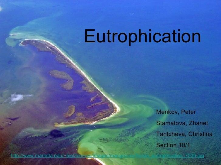 Eutrophication http://www.marietta.edu/~ biol/biomes/images/mangroves/florida_eutrophication_7536.jpg   Menkov, Peter Stam...