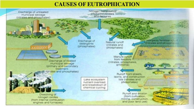 contributing factor of water pollution The most common agricultural water pollution is loss of top soil that is washed from fields rainwater carries soil particles or sediments and deposits them in lakes or streams nearby, thus affecting water quality other pollutants such as.