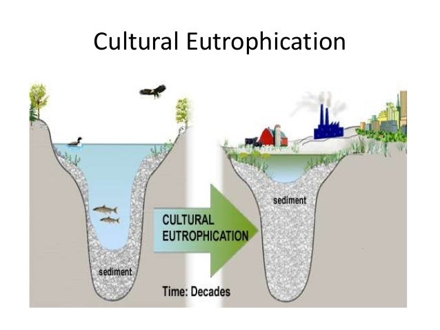 research papers eutrophication Do you need assistance with a phd dissertation, a phd thesis, or a masters research proposal about eutrophication thesis papers, and research proposals.